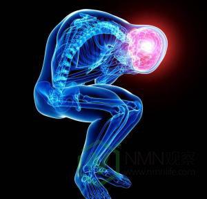帕金森患者的希望:nmn能阻止神经细胞死亡