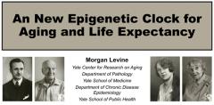什么是生理年龄?生理年龄与衰老,NMN对生理年龄的逆转作用