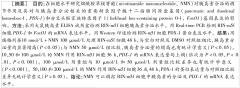 [学术文献]烟酰胺单核苷酸对RIN-M5F细胞中PDX-1和FOXO1胰岛素分