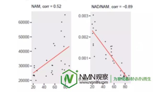 NMN中国:提升NAD+方式比较,烟酰胺/NAM可能是一个糟糕的策略