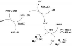 """一种小分子可使NMN水平倍增,有望成""""续命""""新手段"""