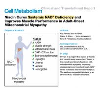提高NAD治疗疾病的最新研究介绍